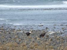 Eagles Outside my Widow