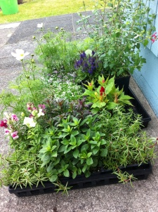 Plants for seaside gardens.